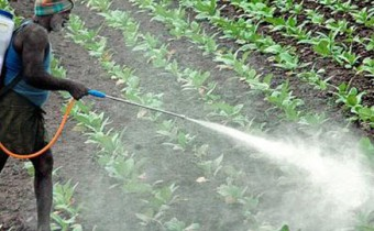 organic-insecticide-spray
